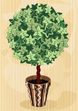 Topiary Tree in decorative flowerpot Royalty Free Stock Image