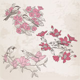 Retro Illustrations - Flowers and  Birds Royalty Free Stock Image
