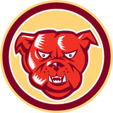 Retro ilsken cirkel för bulldoggbyrackahuvud Royaltyfria Foton