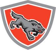 Retro ilskna Wolf Wild Dog Stalking Shield Royaltyfri Bild