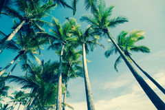 Retro image Palm trees. Retro image of Palm trees low angle view Stock Image