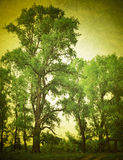 Retro image road and tree on green field Royalty Free Stock Images