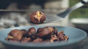 Retro image of roasted chestnut on a  spatula stock images