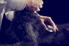 Retro Image of Veterinarian Examines Puppy Using Stethoscope Stock Photography