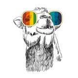 Retro- Kamel des Vektors Lizenzfreie Stockfotos