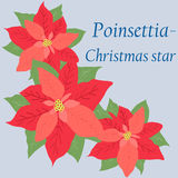 Retro Kerstkaart met bloempoinsettia Royalty-vrije Stock Afbeeldingen