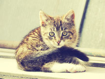 Retro Kitten Photo Royalty Free Stock Photos