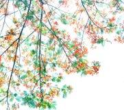 Retro kleurentoon van Flam-boyant bloem met witte achtergrond royalty-vrije stock afbeeldingen