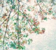 Retro koloru brzmienie Flam-boyant kwiat z lekkim grunge tłem Obrazy Royalty Free