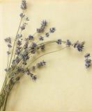 Retro lavender postcard Royalty Free Stock Photo