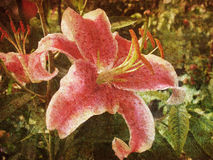 Retro Lily Stock Images