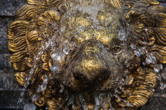 Retro Lion Statue Fountain while the water is spilling on her face.  Royalty Free Stock Photos