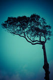 Retro lonely tree against the sky Stock Photo