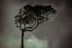 Retro lonely tree against the sky Royalty Free Stock Image