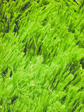 Retro look Artificial meadow Royalty Free Stock Images