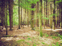 Retro look Forest of trees Stock Photography