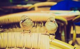 Retro look Nightingale Royalty Free Stock Photos