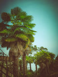 Retro look Palm tree Stock Photos