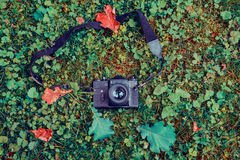 Retro macchina fotografica sull'erba nel parco di autunno Immagine Stock