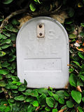 Retro Mailbox. Retro grey mailbox among bright green leaves Royalty Free Stock Photo