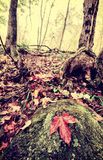 Retro Maple Leaf on a Rock in an Autumn Forest. A single red maple leaf sits a top a moss and lichen covered rock in a forest with fall leaves covering the Royalty Free Stock Photos