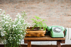 Retro mint green rotary telephone on wood table. A Retro mint green rotary telephone on wood table royalty free stock images
