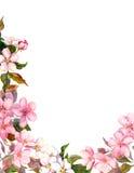 Retro- mit Blumenhintergrund mit Blüte Weiße, rosa Apfelblumen Weinlese Watercolour Lizenzfreies Stockfoto