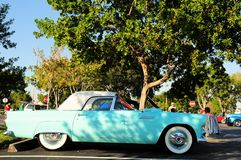 Retro muscle car, Thunderbird, FL. Right side view of an American antique car in a parking lot in South Florida Stock Images