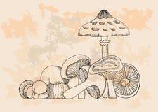 Retro Mushrooms set Stock Image