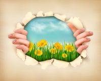 Retro nature background with grass and flowers Royalty Free Stock Photography