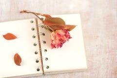 Retro nieżywa czerwieni róża Fotografia Stock