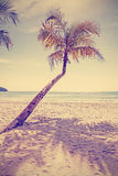 Retro old film style toned tropical beach with palm tree Stock Image