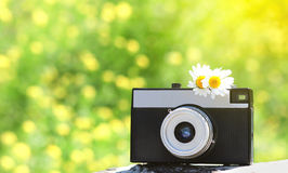 Retro old vintage camera with chamomiles flowers Stock Photos