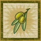 Retro olive branch Stock Images