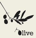 Retro olive design Royalty Free Stock Photo