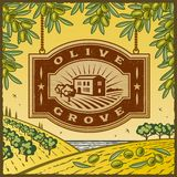 Retro Olive Grove Stock Photos
