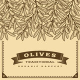 Retro olive harvest card brown Stock Photography