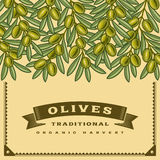 Retro olives harvest card Royalty Free Stock Images