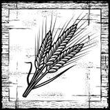 Retro orecchie del cereale in bianco e nero Fotografie Stock Libere da Diritti