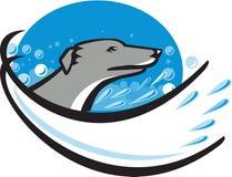 Retro ovale della bolla dell'acqua della testa di cane del levriero Immagini Stock Libere da Diritti
