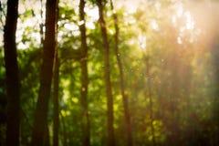 Retro paesaggio vago d'annata della foresta con le perdite e il bokeh Fotografie Stock Libere da Diritti