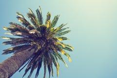 Retro Palm Tree Royalty Free Stock Photos