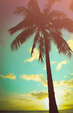 Retro palma hawaiana disegnata Fotografie Stock Libere da Diritti