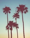 Retro palme di tramonto Fotografia Stock