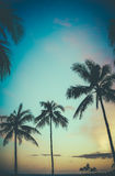 Retro palme di tramonto delle Hawai Fotografia Stock Libera da Diritti