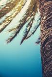 Retro palmträddetalj med kopieringsutrymme Royaltyfria Bilder
