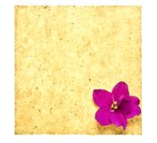 Retro Paper With Flower Royalty Free Stock Image
