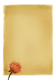 Retro paper with rose. Paper with pink rose - background Royalty Free Stock Images