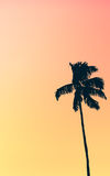 Retro Pastel Colored Single Palm Tree. Illustration Of Retro Style Single Palm Tree Against Muted Pastel Colored Tropical Red And Orange Sunset Royalty Free Stock Photography