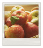 Retro photo of apples  Royalty Free Stock Photo